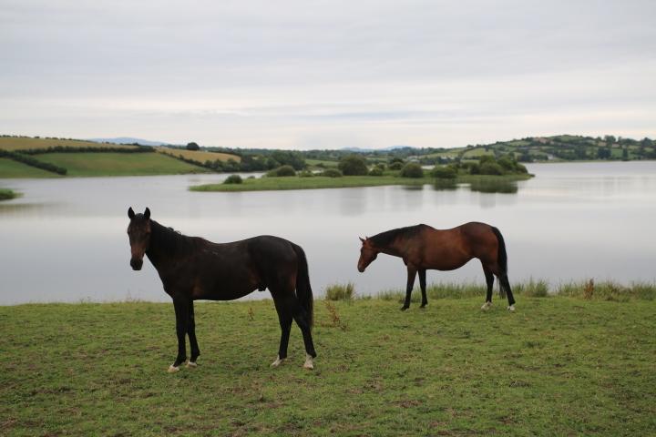 Along the Irish-British border / Le long de la frontière Irlando-Britanniqie